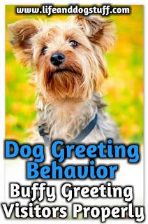 Dog Greeting Behavior - Buffy Greeting Visitors Properly.