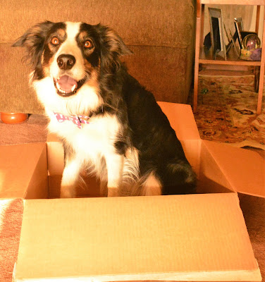 Subscription pet food box