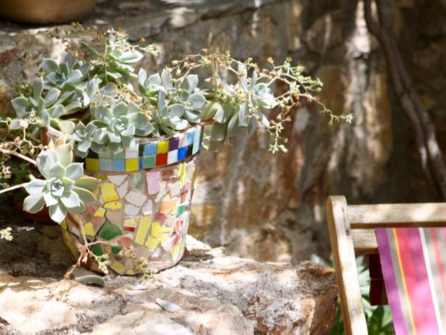 Spring gardening - succulents
