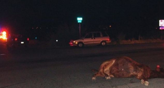 7 cars involved in accident because cow enters highway in Albania