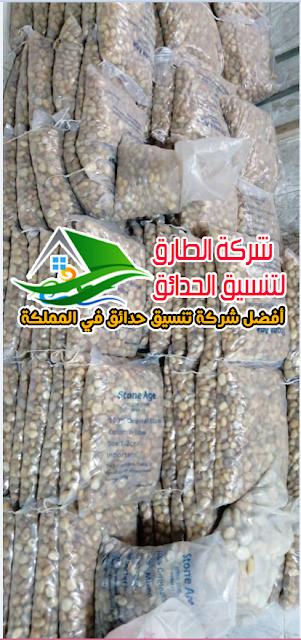 تزيين الحدائق بالحصي في الرياض