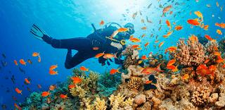 Snorkelling & diving activities