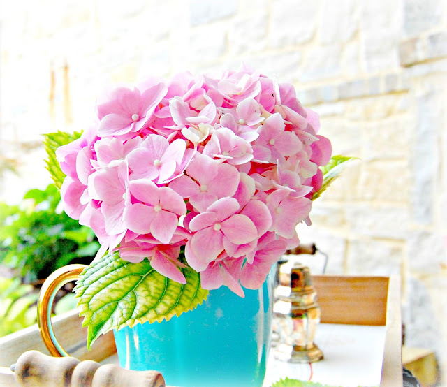 At Home With Jemma Growing French Hydrangeas For The Home And