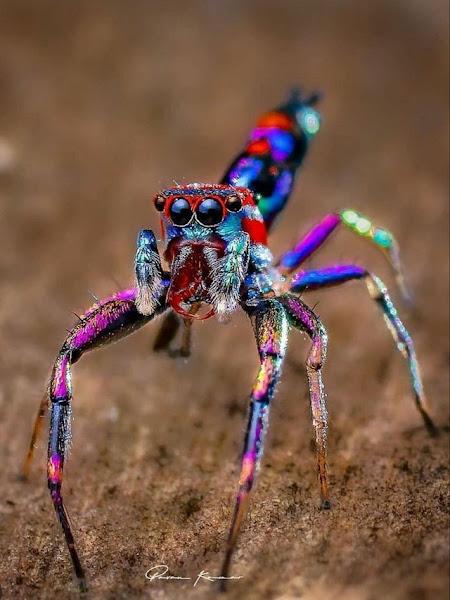 [Image: spider.jpg]