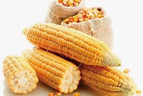 jarabe de maíz alto en fructosa obesidad síntomas de diabetes