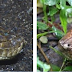 Compare Reticulated Python Vs Green Anaconda