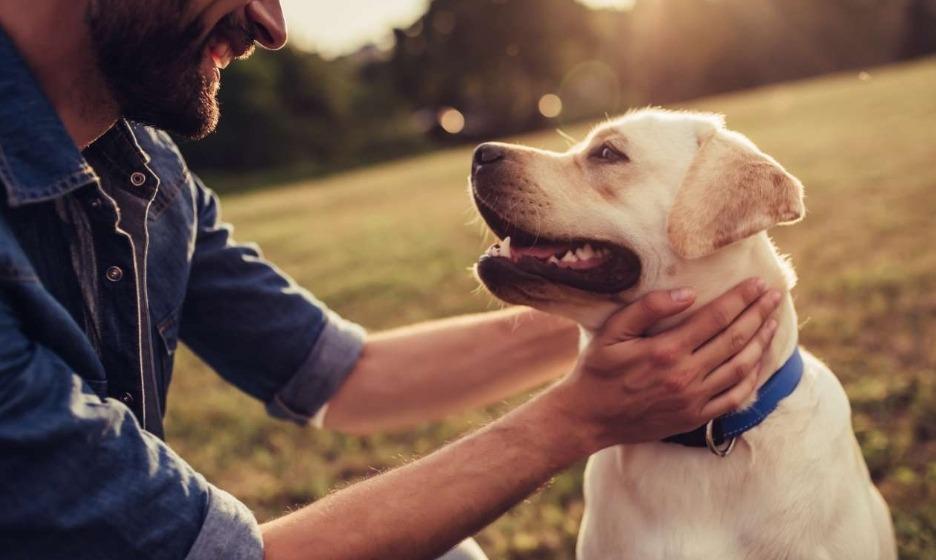 Σκύλος και άνθρωπος – μια αμφίδρομη σχέση χωρίς λόγια
