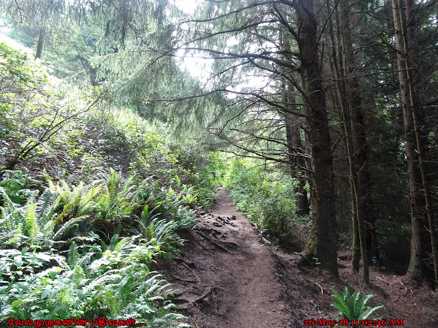 Necarney Creek Trail Oregon