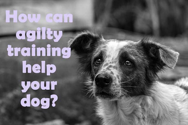 How can agility training help your pup