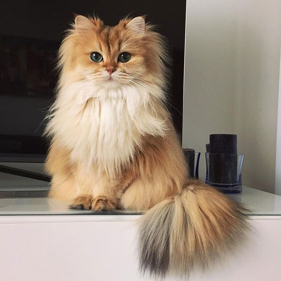 Cutest-Cat-Of-The-Year