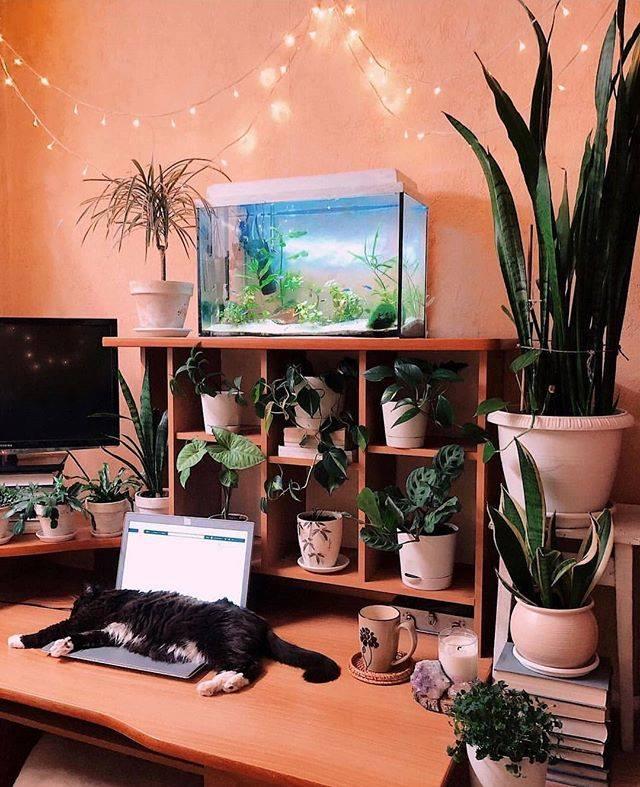 """Los animales y plantas son """"seres vivos que potencian el chi/energí"""