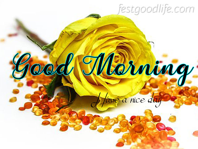 yellow red rose good morning images download