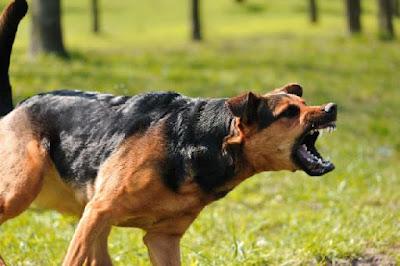 Cão Raivoso