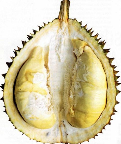 Duren Perwira - Durian Lokal Kualitas Unggul Dengan Rasa Manis Pahit Dari Majalengka