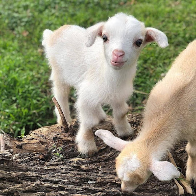 cute baby animal picture