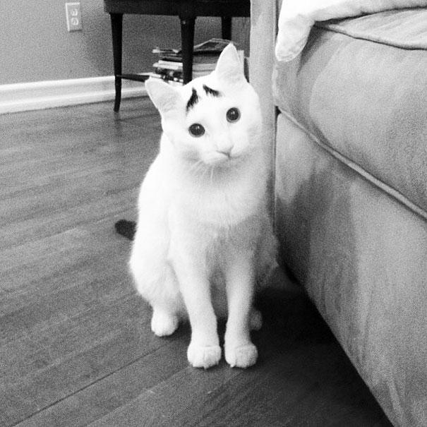 صور قطط,صور عن القطط,قطط مضحكة ,قطط جميلة ,قطط كيوت,