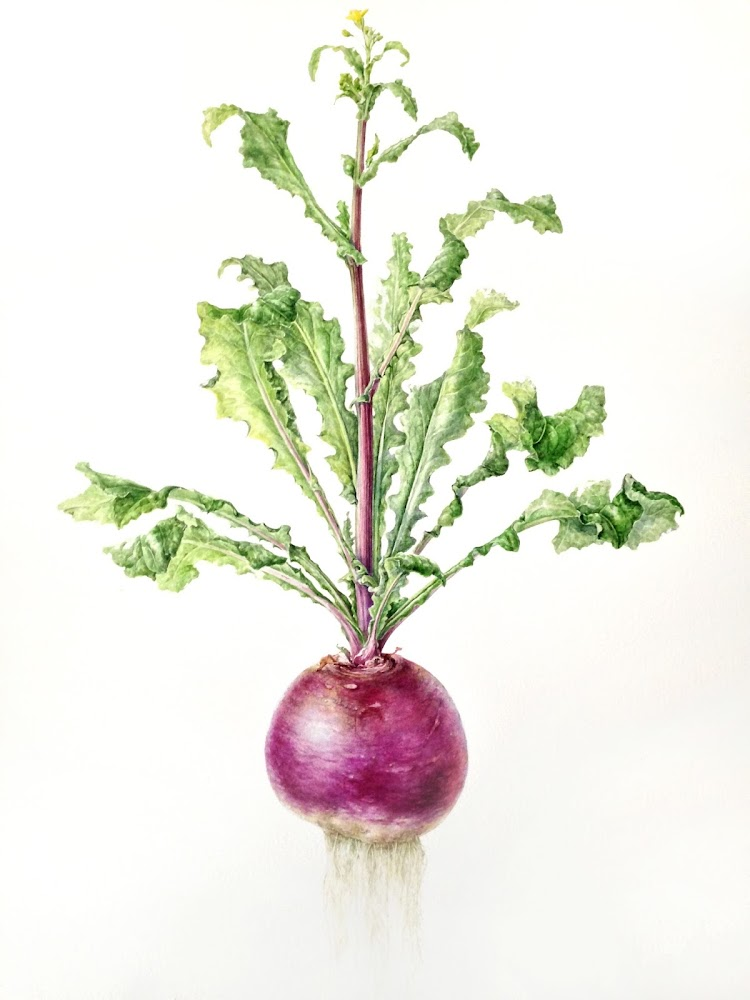 Turnip painting