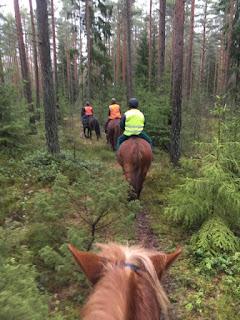 kylämäen hevostilalla maastolenkillä