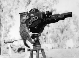 https://commons.wikimedia.org/wiki/File:A_possum_and_a_movie_camera_1943.jpg