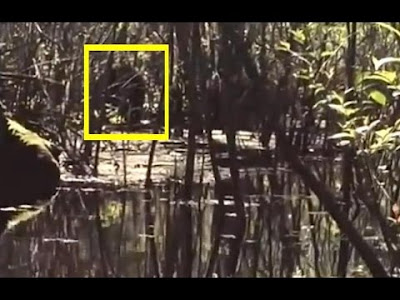 Lettuce Lake Florida Skunk Ape