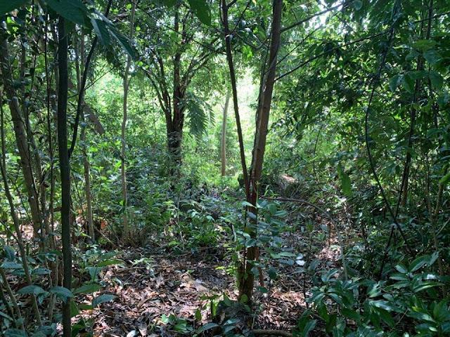 Kiên Giang: Quản lý kém, Phú Quốc mất hơn 3.000 ha rừng trong 6 năm