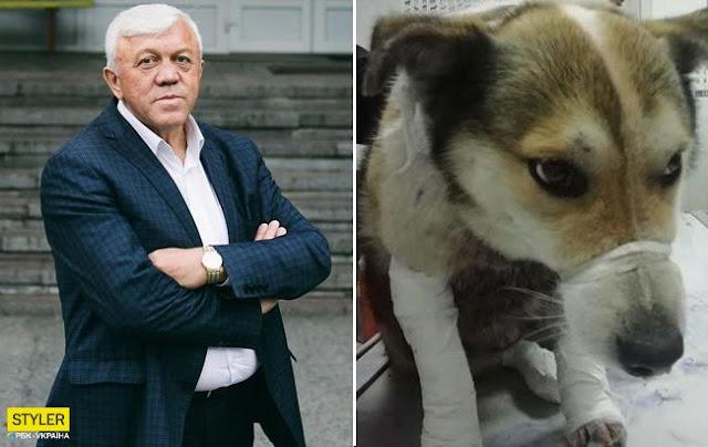 Экс-чиновник привязал свою собаку к автомобилю и протащил полтора километра по дороге
