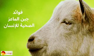 جبن الماعز