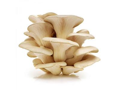 Oyster Mushroom Classification