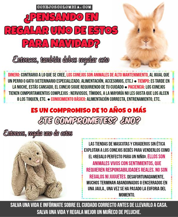 Primeros auxilios para conejos | Conejos Colombia