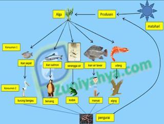 jaring–jaring makanan ekosistem sungai www.simplenews.me