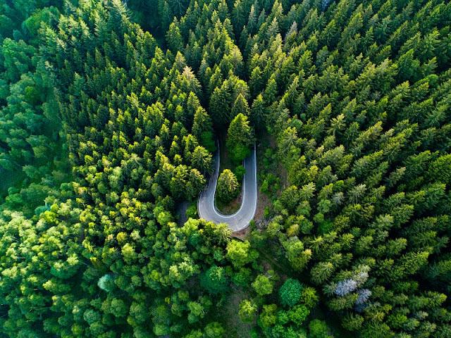 Panoramica Zegna conifere drone