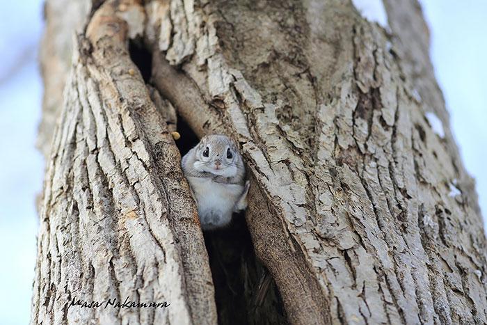 Японские Белки: Самые Очаровательные Зверушки
