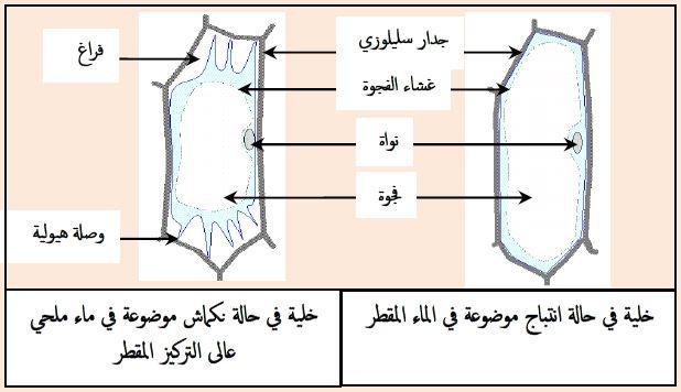 ملخصات الخلية وحدة بنيوية للسنة الثانية ثانوي علوم طبيعية