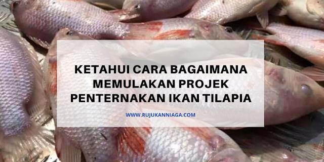 Ketahui Cara Bagaimana Memulakan Projek Penternakan Ikan Tilapia