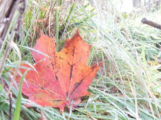 peaceful gardening im Herbst