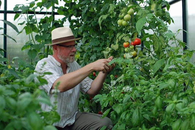 ich im Gewächshaus mit Tomaten und Basilikum (c) by Joachim Wenk