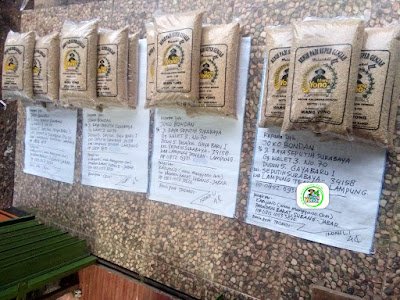 Benih padi yang dibeli   JOKO BONDAN Lampung Tengah, Lampung.  (Sebelum packing karung).