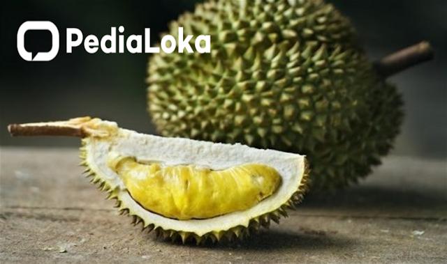Manfaat Dan Bahaya Makan Durian Yang Perlu Diketahui Pecinta Durian