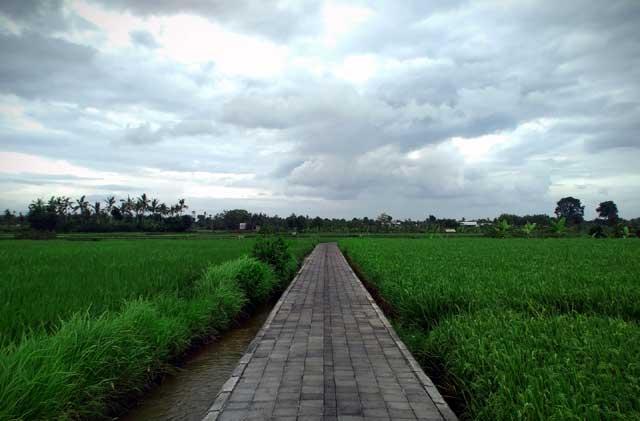 Wisata Jogging Membelah Sawah, Desa Anggabaya Bali Bisa Dicontoh