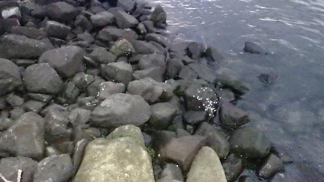 河川 ゴロタ