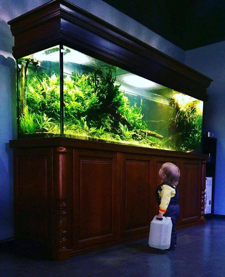 bé gái ngắm nhìn bể thủy sinh