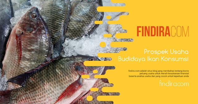 Prospek Usaha Budidaya Ikan Konsumsi