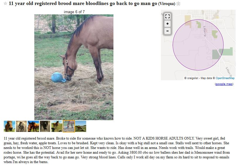 I hope that this is the last blog post I will have to do on Amanda  Everhart  The whole thing sickens me  In cases of neglect  an argument can  be made that. North Horse  07 22 17
