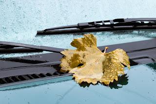 Conducir en otoño: lluvia, hielo y niebla - Fénix Directo Blog