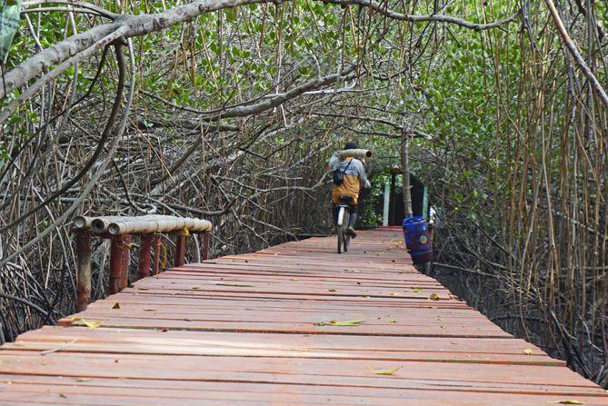 Pohon Bakau rimbun di Mangrove Rembang
