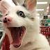 Zira, la perrita que visitó el supermercado, se vuelve viral