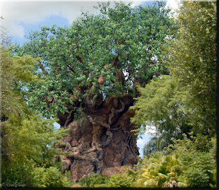 Happy 15th Anniversary Disney's Animal Kingdom