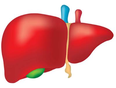 هل تزول دهون الكبد؟