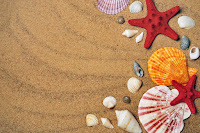 picture of sand and seashells