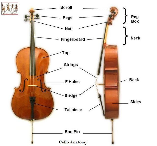 Every part of the cello, including features that appear to be for decoration, like the small holes on the front of the instrument, are necessary for achieving the low tone beloved by listeners around the world.